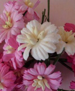Fiori di Carta - Margherite Miste Rosa e Bianco